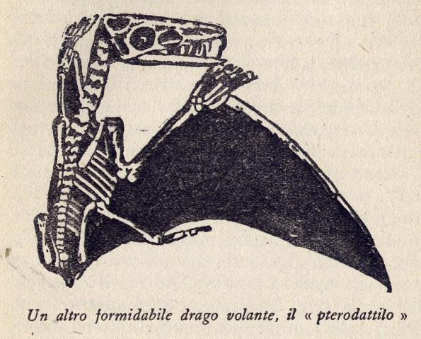 Papp-Pterodattilo