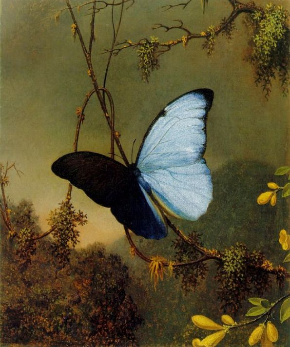 blue-morpho-butterfly-by-martin-johnson-heade